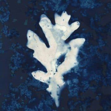 Wet Cyanotype Techniques with Emie Hughes
